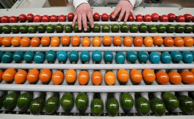 Proses sortir telur berwarna
