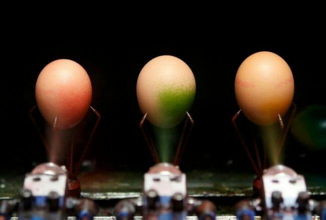 Pewarnaan telur