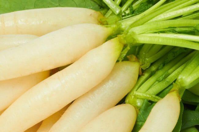Sayuran Lobak