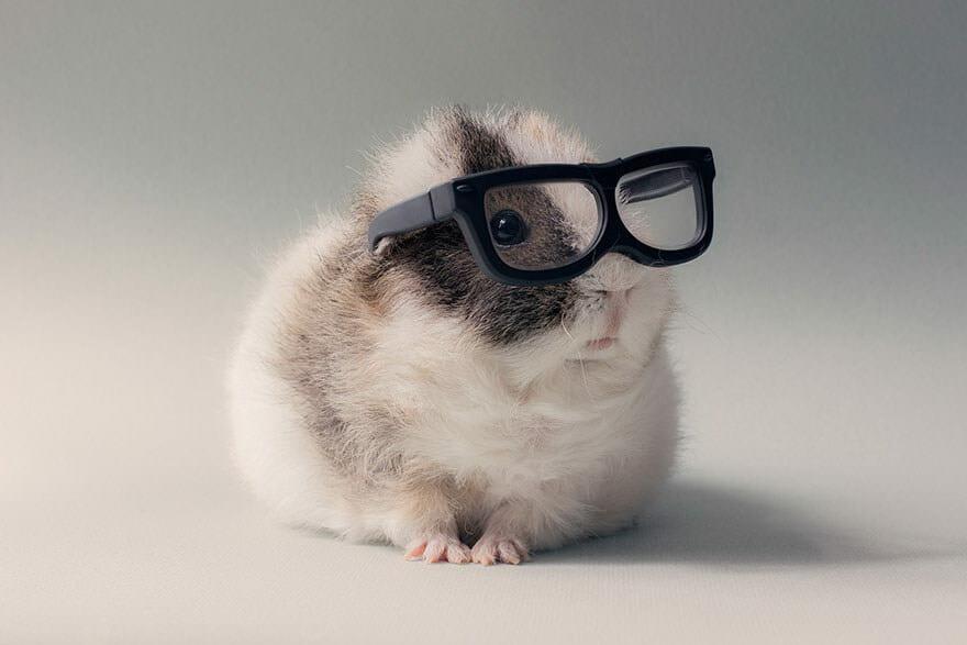 Hamster imut 3