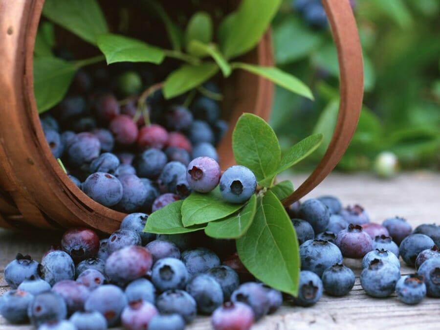 Gambar Blueberry