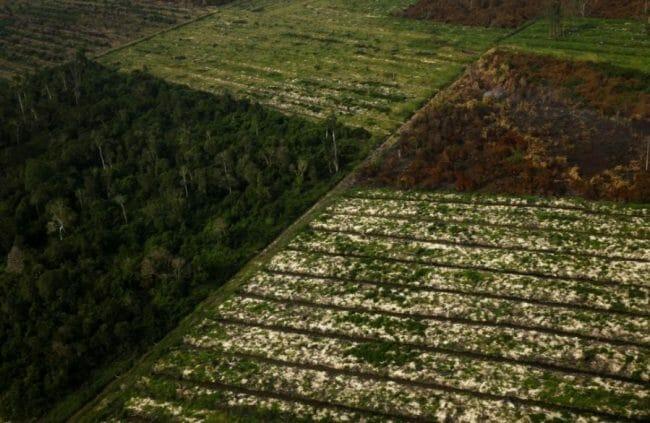 Hutan Riau dibakar
