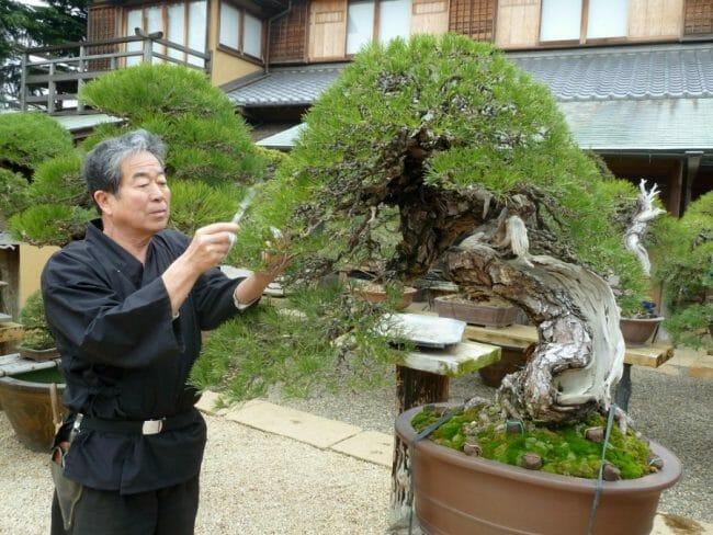 Pengendalian hama dan penyakit pada bonsai