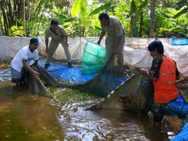 Budidaya Ikan Lele - Tips Perawatan Ikan Lele