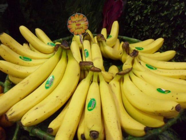 pisang mengandung