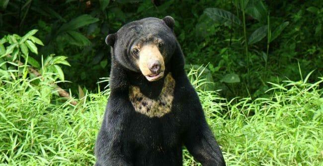 beruangmadu.org