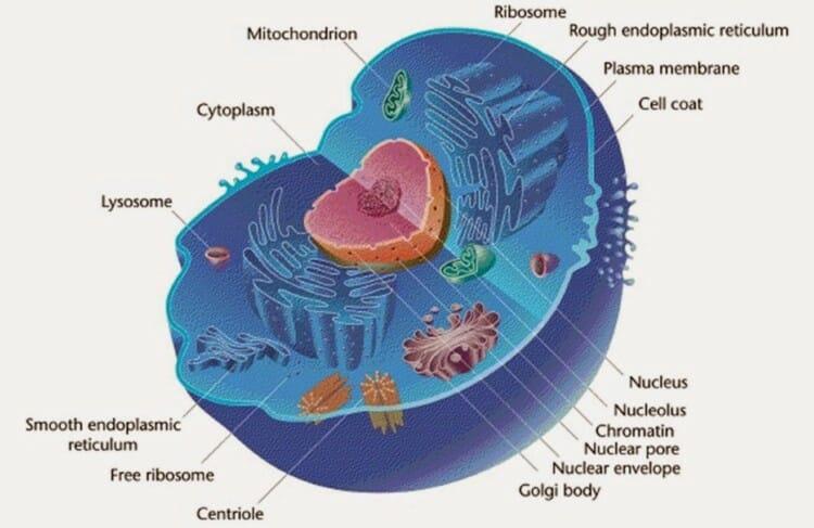 perbedaan prokariotik dan eukariotik.