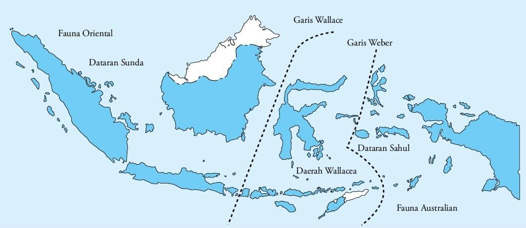Persebaran Flora Indonesia